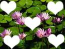 coeur 5 photo