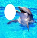 Hope Dolphin-hdh 1