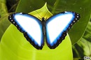 Floflo' Papillon'