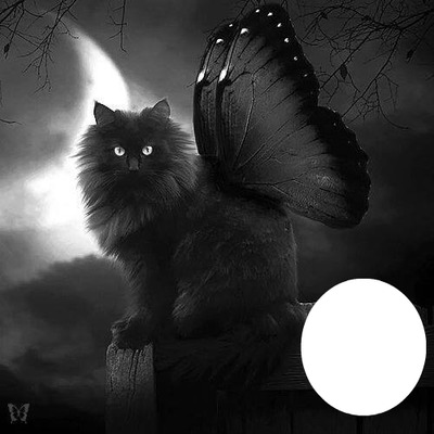 BLACK ANGEL KITTY