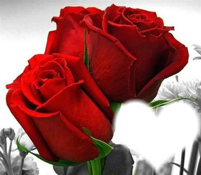 rosas para ti amor