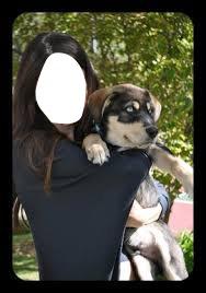 selena gomez et son chien 2
