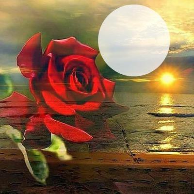 rose paysage