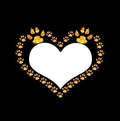 empreintes de pattes de chien or en forme de coeur 1 photo