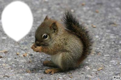 a mon écureuil