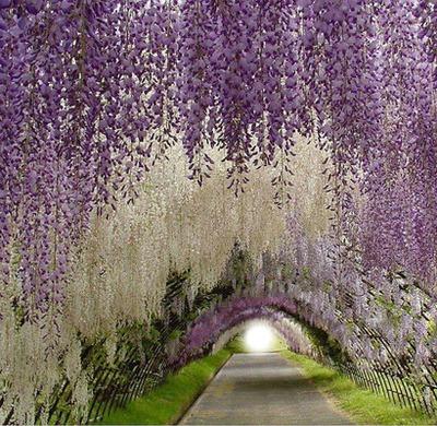 Hermoso tunel