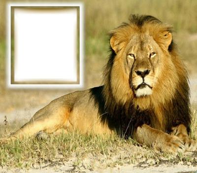 Animaux (lion)