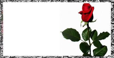 fleure roge