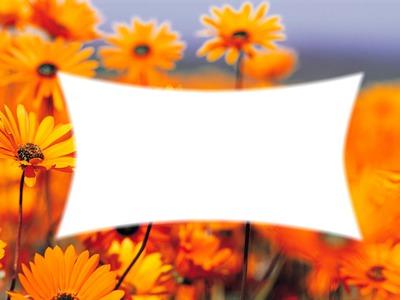 fleurs jaune printemps
