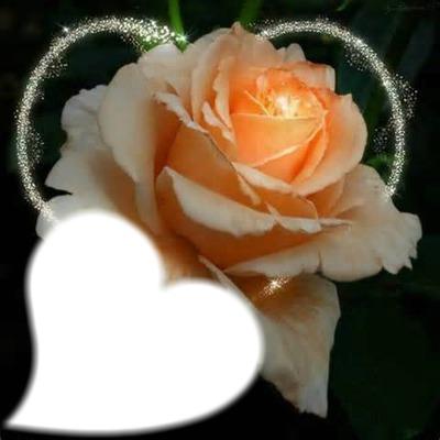 Bella Rosa 3