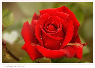 ma fleure de vie