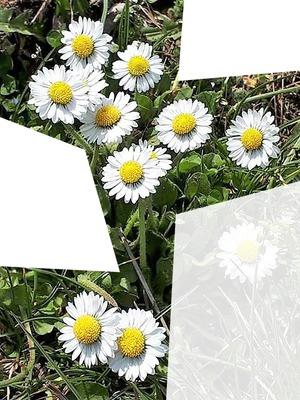 printemps / été 3 photos