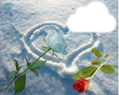2 roses et un coeur