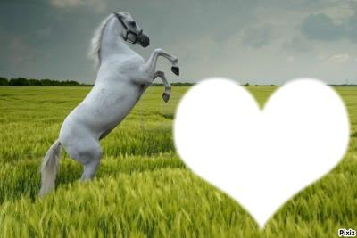 Cheval dans un champs
