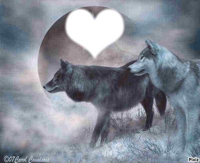 moon wolf