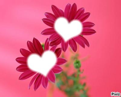 *fleurs gerbéra rose*