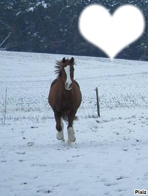 cheval qui galope dans la nature