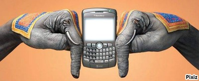 Deux mans, deux elephants avec BlackBerry
