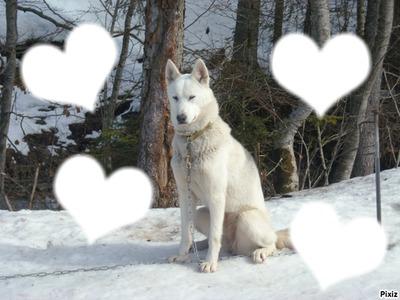 chien des neiges