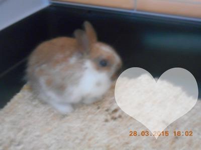 lapin avec coeur + une photo