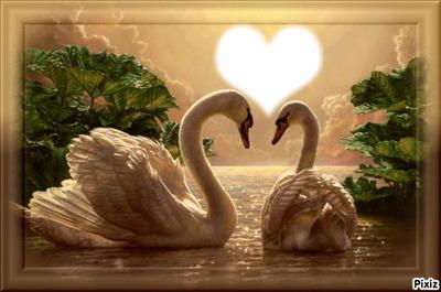 cygnes et coeur