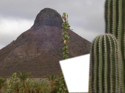 pilon con cactus