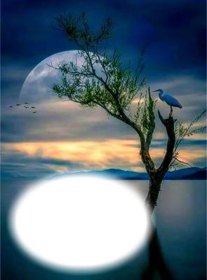 Nuit-lune-oiseau-lac