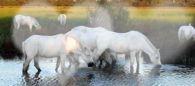Fondu coeurs sur fond de chevaux