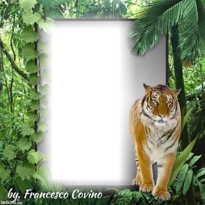 franco tigre