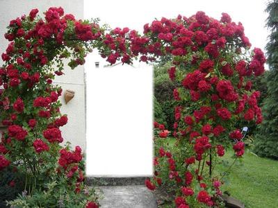 portail de rose