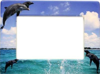 рамка за снимка с пейзаж Море и Делфини