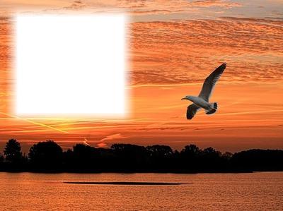 Nature-paysage-coucher de soleil-oiseau
