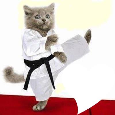 karate macsek