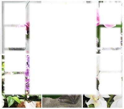 cadre 9 photos orchidées