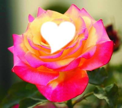 Fleure + Coeur