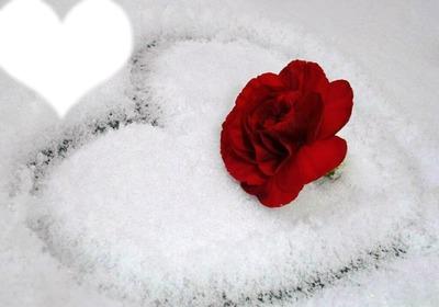 Rose rouge + neige