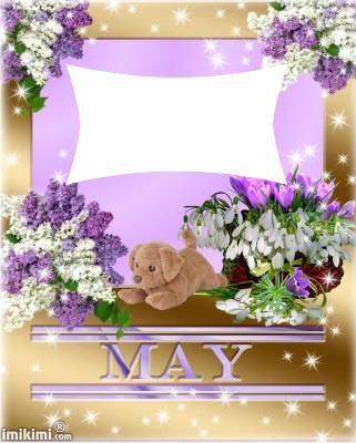 lilas blanc et mauve