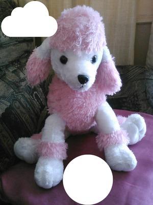 Caniche rose toutou chien