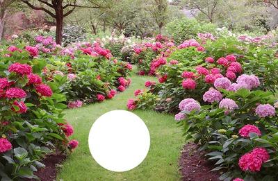 Montaje Fotografico Jardin Pixiz Fondo para saludos o postales. montaje fotografico jardin pixiz