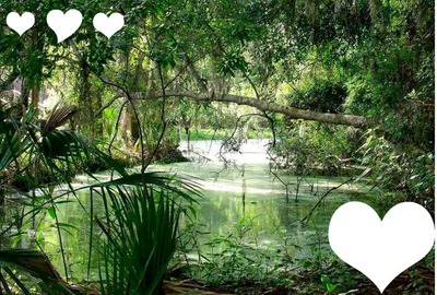 Montaje Fotografico Portada De La Naturaleza Pixiz