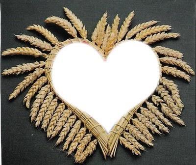 coeur epi de blé