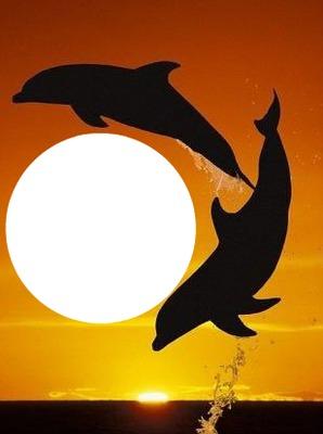 2 dauphins dans la nuit 1 photo