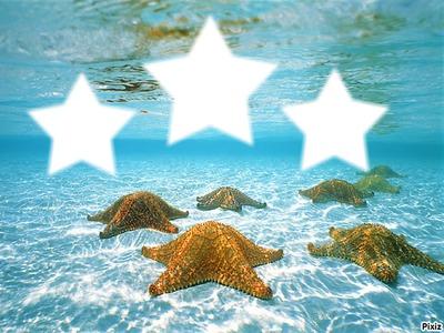 Étoiles de mers