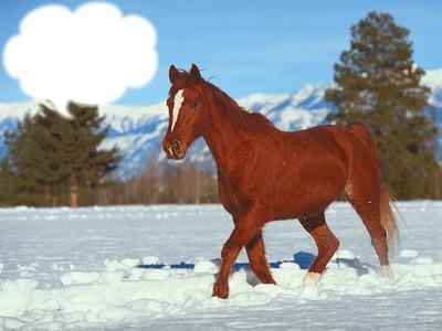 Le cheval dans la neige