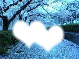 sakura love or sahira