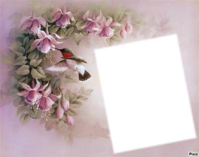 colibri 2