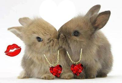 2 ptits lapins amoureux 1 photo