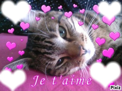 chaton famille je t aime