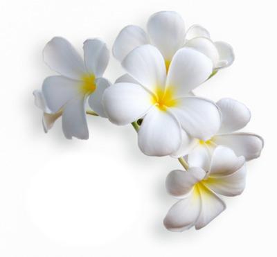 Beautiful flower #22