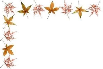 cadre feuilles